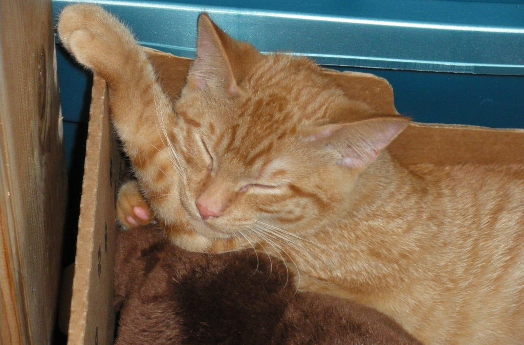 Herbs & Homeopathy for a Cats Injury