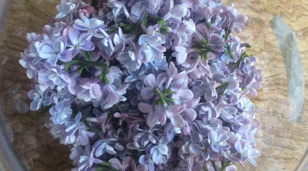 Lilac Blossom Cordial